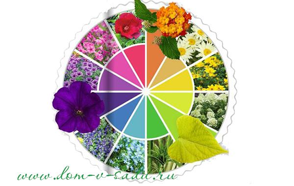 Цветовая схема клумбы