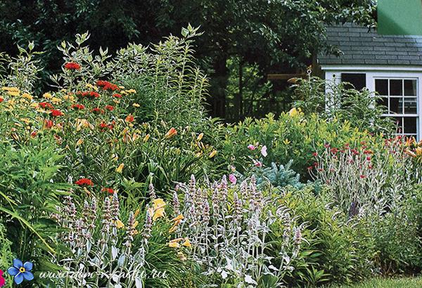 Цветник из неприхотливых растений около дома