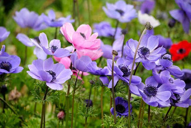 Цветы многолетники для сада - неприхотливые и долгоцветущие!