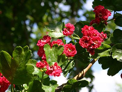 Цветы и кустарники для сада