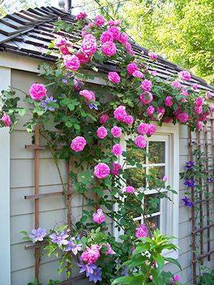 Цветы на опоре у дома