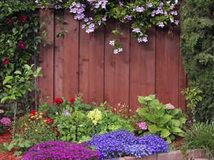 как украсить забор цветами