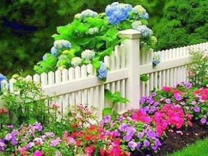 красивый цветник