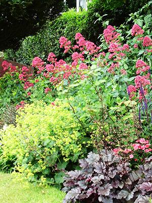 Цветы для сада неприхотливые долгоцветущие