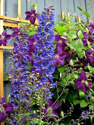 вьющиеся цветы около дома