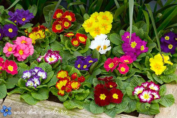 Какие можно посадить цветы дома