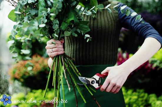 как прорастить розы из букета