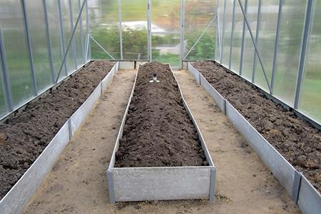 Посадка огурцов в теплицу из поликарбоната когда сажать и как вырастить