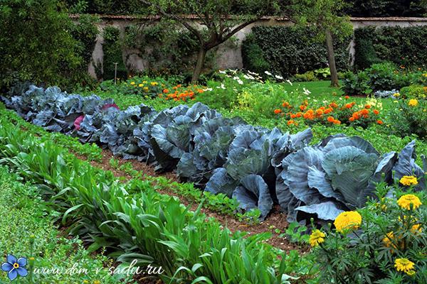 полезные советы для дачи и огорода