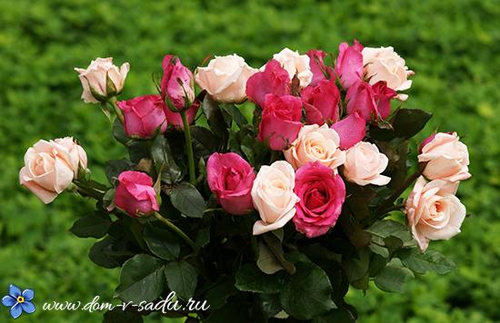 вырастить розу из букета дома