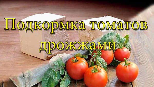 подкормка помидор дрожжами