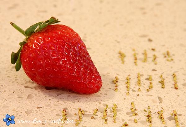 Размножение клубники