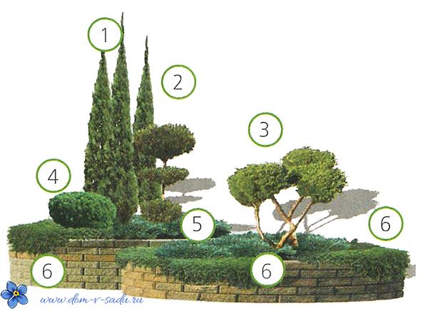 какие хвойные деревья посадить на даче