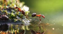 как бороться с муравьями в огороде