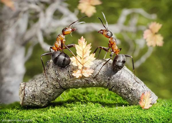 Муравьи борьба с ними в огороде