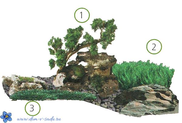 композиции из хвойников в ландшафтном дизайне