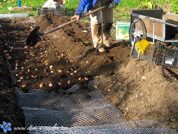 когда сажать луковичные осенью