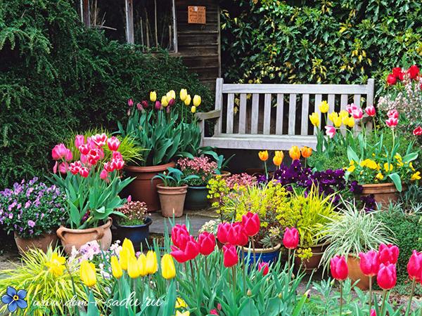 луковичные в саду