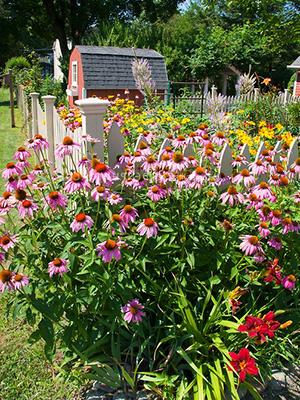 многолетние осенние цветы