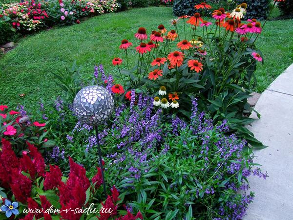 рудбекия в саду