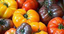 красивые помидоры