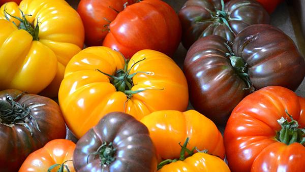 Лучшие сорта помидоров для подмосковья в теплицах