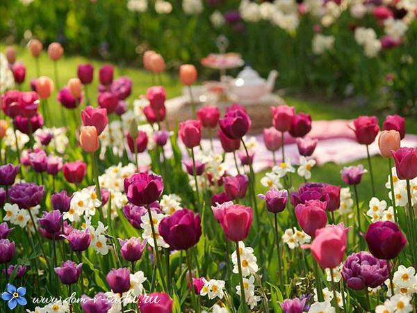 клумба с нарциссами и тюльпанами
