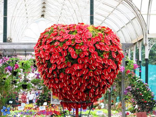 Домашние живые цветы в гошках с ягодами клевер луговой цветы купить
