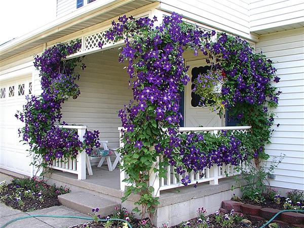 оформление веранды цветами