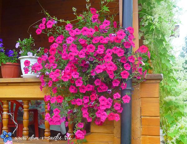 как оформить веранду на даче цветами