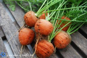 Морковь Ромео