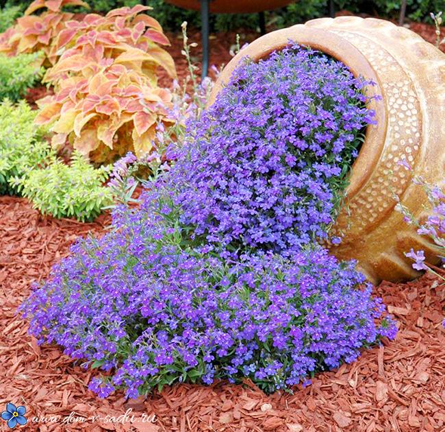 Цветы для сада (55 фото): неприхотливые для ленивых, красивые, простые без хлопот, легкие в уходе для клумбы