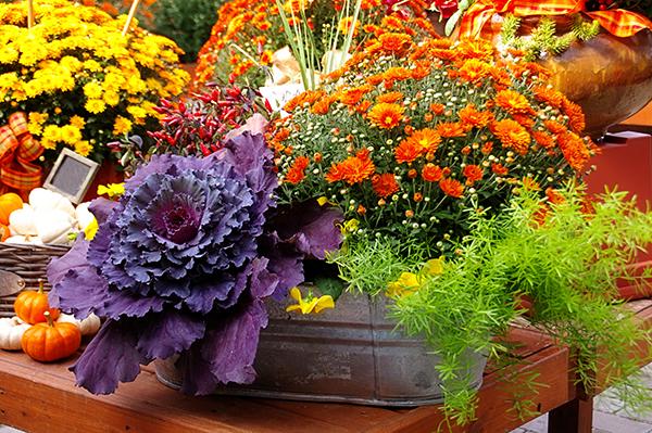 Лунный календарь огородника на ноябрь