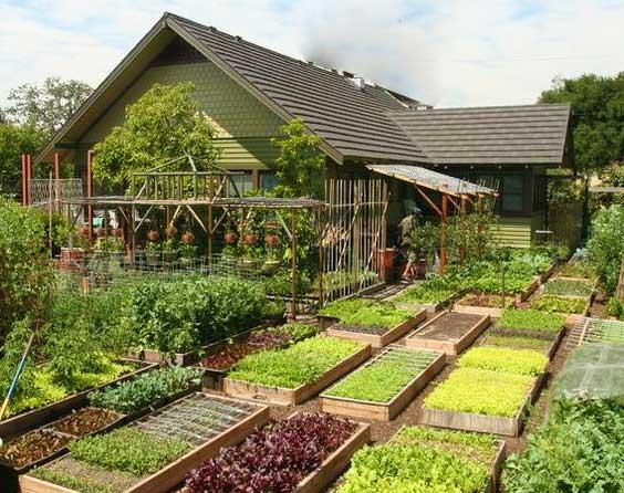 Сад и огород ростов