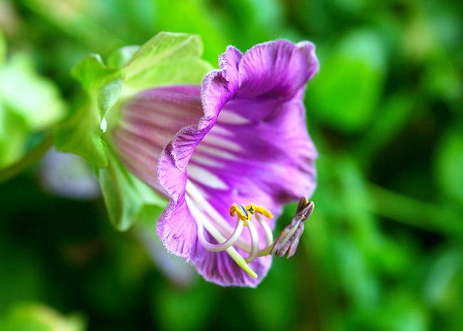 Цветы многолетние посев