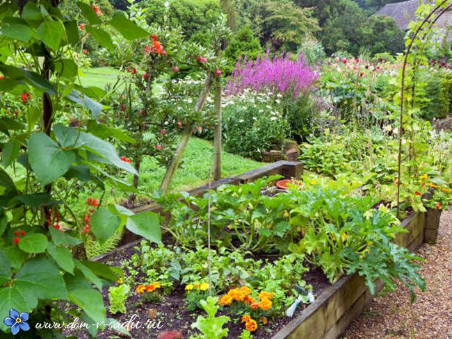 красивый огород