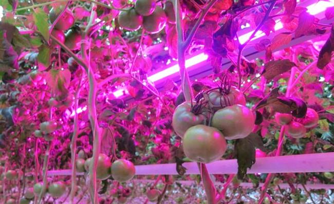 Свет для растений Osvewenie-rassady