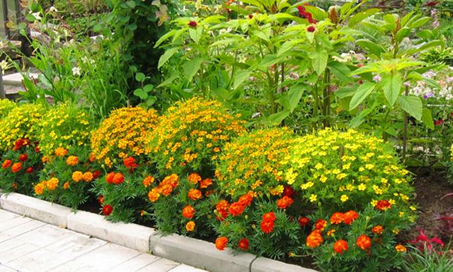 Цветы вдоль тропинки 64