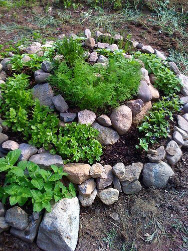 клумба спираль из овощей