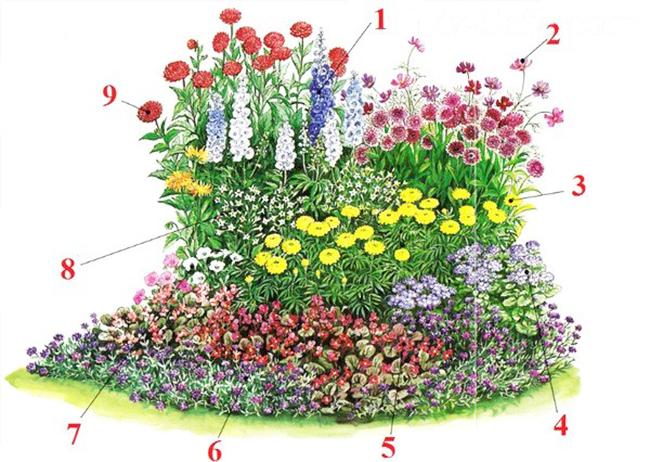 Каталог и фото многолетних вьющихся цветов
