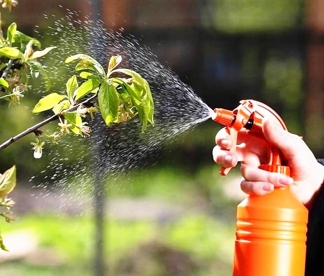 Применение борной кислоты в огороде