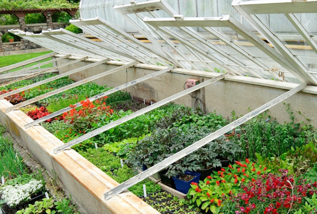 Что можно сажать в апреле на рассаду какие семена и когда сеять