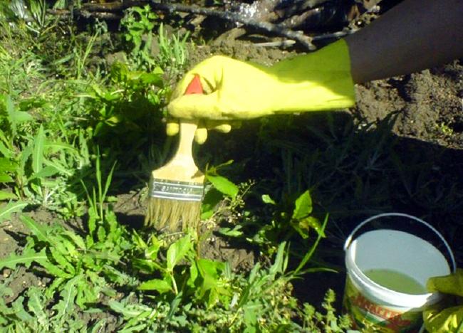 Борьба орняками на дачном участке народными средствами
