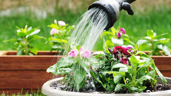 Можно ли цветы поливать дрожжами