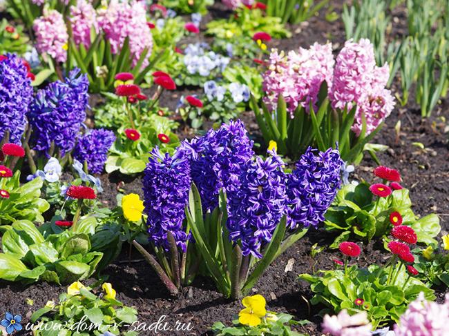 Какие цветы сажать на
