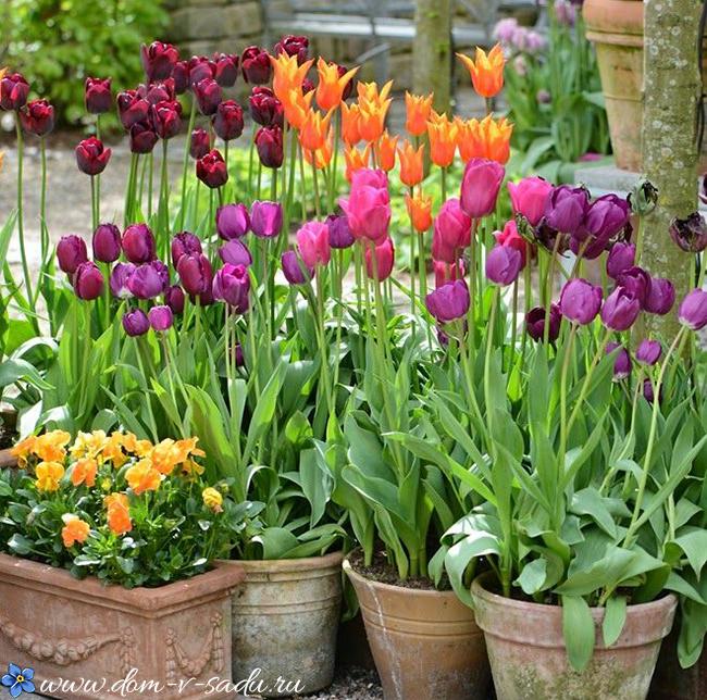пример: можно ли сажать тюльпаны в ноябре Новое сайте