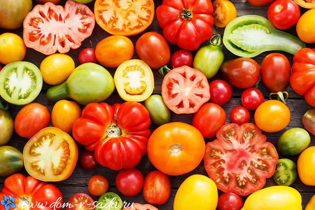 самые урожайные сорта помидор для теплиц