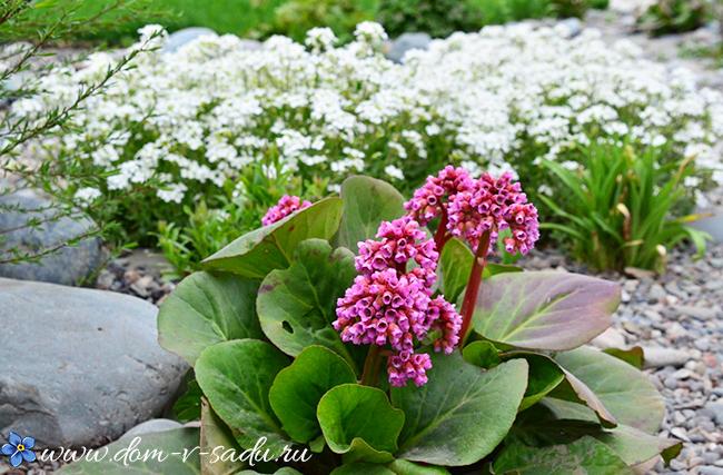 теневыносливые растения примеры