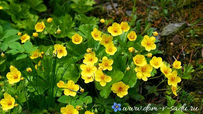 какие цветы любят тень