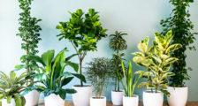 комнатные цветы для дома